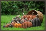 MM 252 Bountiful Harvest Pumpkins Pattern